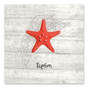 Καλοκαιρινός Κόκκινος Αστερίας