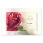 Μοντέρνο Κόκκινο Τριαντάφυλλο