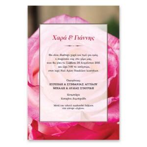 Μοντέρνο Ροζ Τριαντάφυλλο